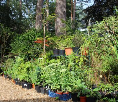 End of Year Plant Sale Promises Bargains