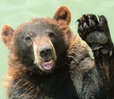 We're going on a bear hunt (sensory version)